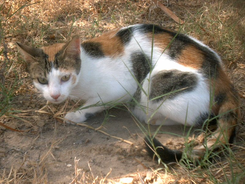 chaton a donner alsace