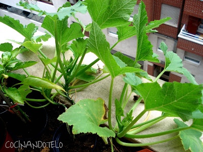 plante lidl