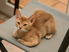 recherche chaton a adopter 76
