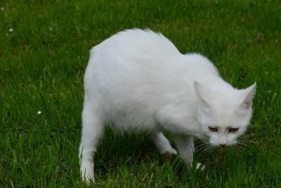 site de chatons a donner