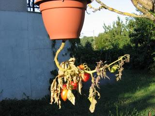système d'arrosage jardin